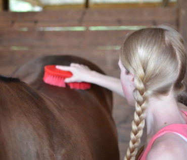 Thunderbay Riding Academy | Horse Riding Lessons, Horse